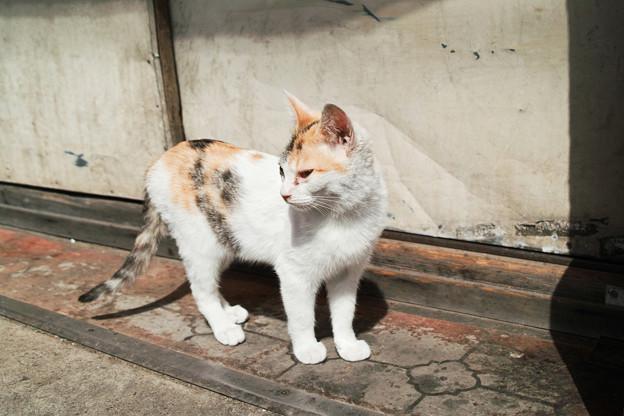 猫撮り散歩2257