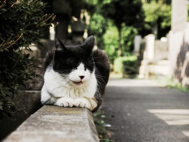 猫撮り散歩2261