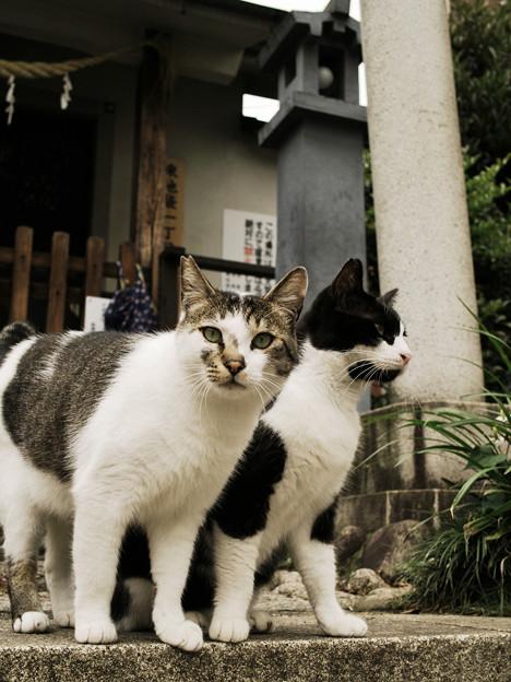 猫撮り散歩2263