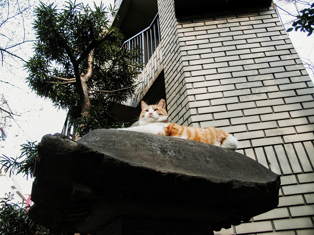 猫撮り散歩2265