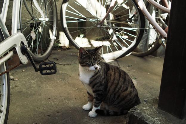 猫撮り散歩2266