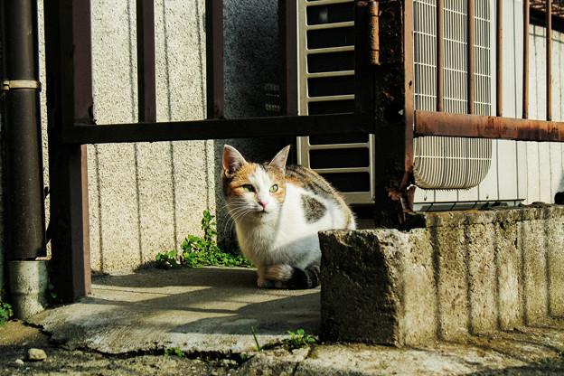 猫撮り散歩2268