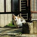 写真: 猫撮り散歩2268