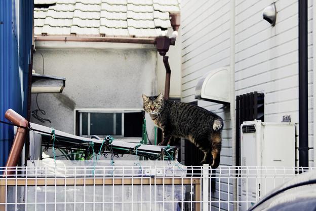 猫撮り散歩2270
