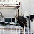 写真: 猫撮り散歩2270