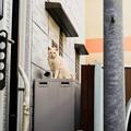 Photos: 猫撮り散歩2271