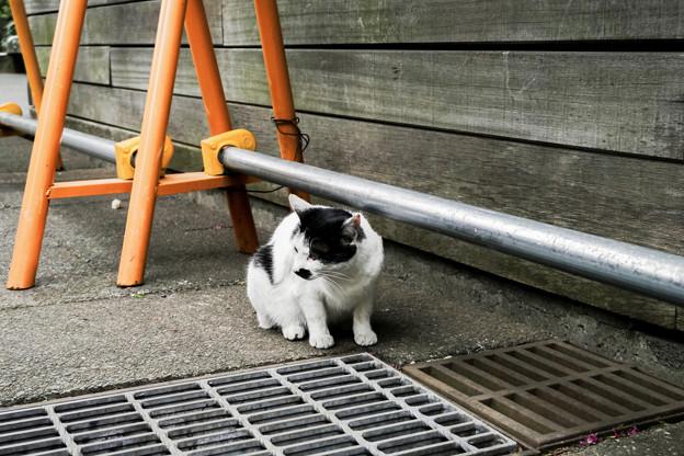 猫撮り散歩2274