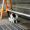 写真: 猫撮り散歩2274
