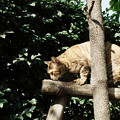 写真: 猫撮り散歩2275
