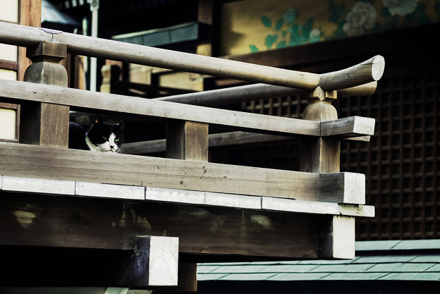猫撮り散歩2279