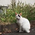 写真: 猫撮り散歩2280
