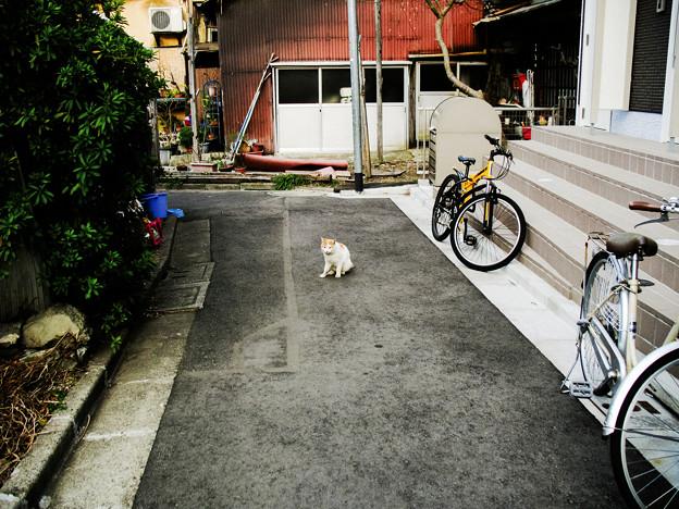 写真: 猫撮り散歩2283