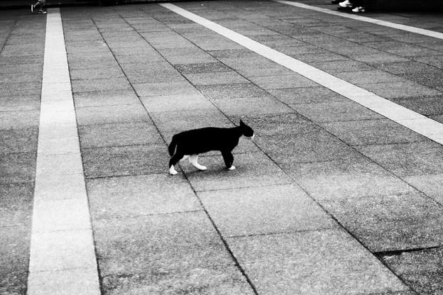 猫撮り散歩2293