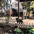 Photos: 猫撮り散歩2296