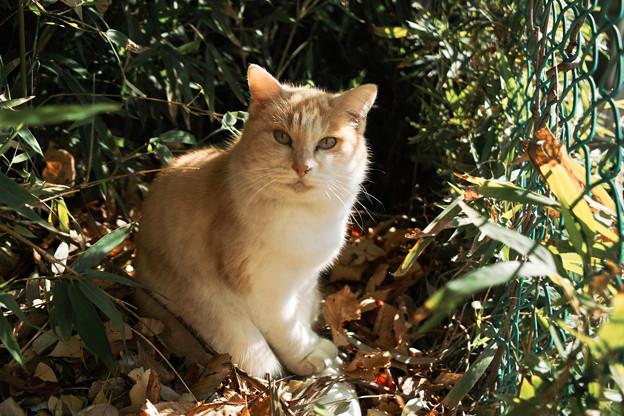 猫撮り散歩2297