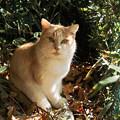 Photos: 猫撮り散歩2297