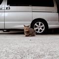 猫撮り散歩2298