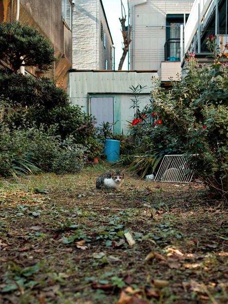 猫撮り散歩2303