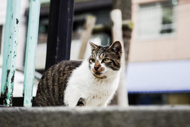 猫撮り散歩2304