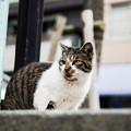 Photos: 猫撮り散歩2304