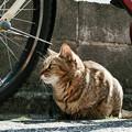 写真: 猫撮り散歩2310