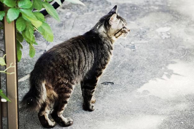 写真: 猫撮り散歩2311