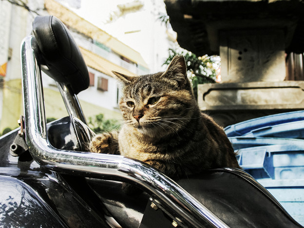 Photos: 猫撮り散歩2315