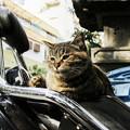 写真: 猫撮り散歩2315