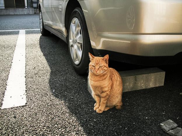 猫撮り散歩2318