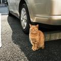 Photos: 猫撮り散歩2318