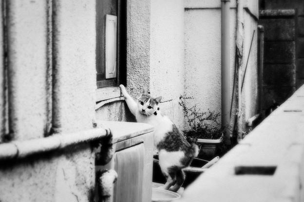 猫撮り散歩2319