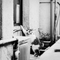 Photos: 猫撮り散歩2319