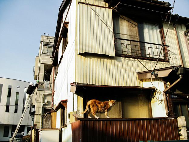 猫撮り散歩2328