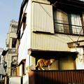 Photos: 猫撮り散歩2328