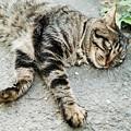 Photos: 猫撮り散歩2329