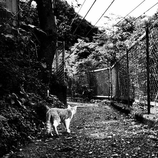 猫撮り散歩2332