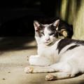 猫撮り散歩2333