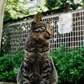Photos: 猫撮り散歩2335