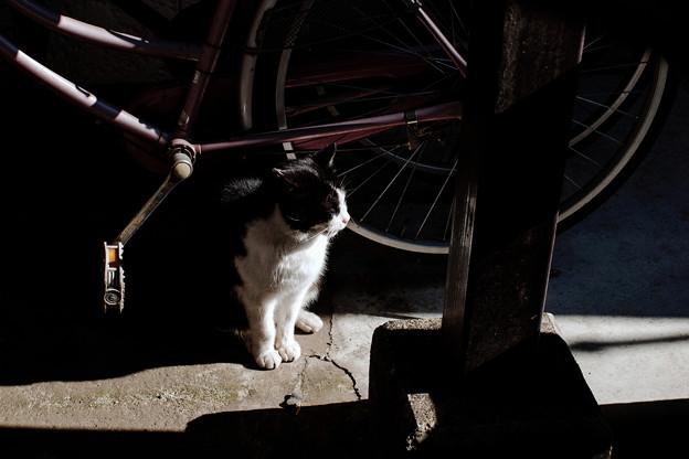 猫撮り散歩2336