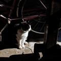 Photos: 猫撮り散歩2336