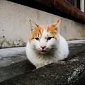 猫撮り散歩2338