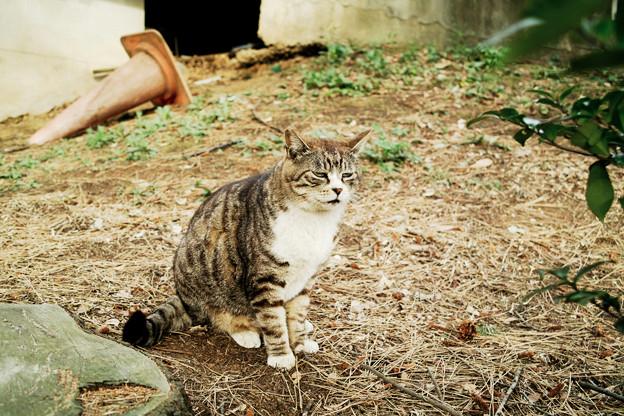 猫撮り散歩2339
