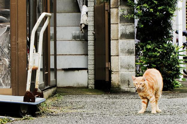 猫撮り散歩2340