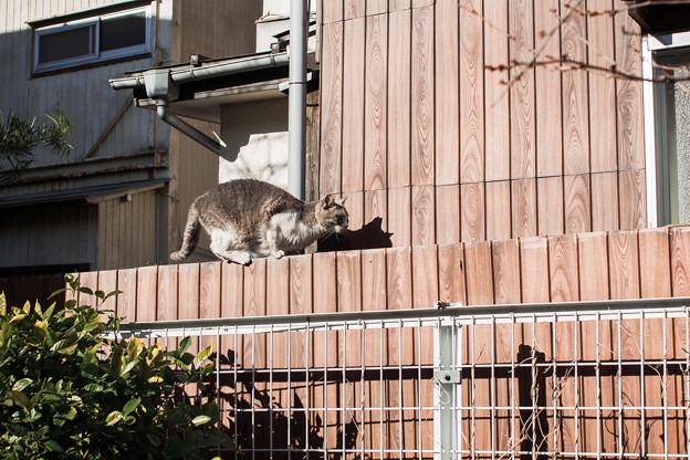 猫撮り散歩2356