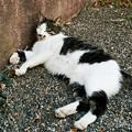 猫撮り散歩2358