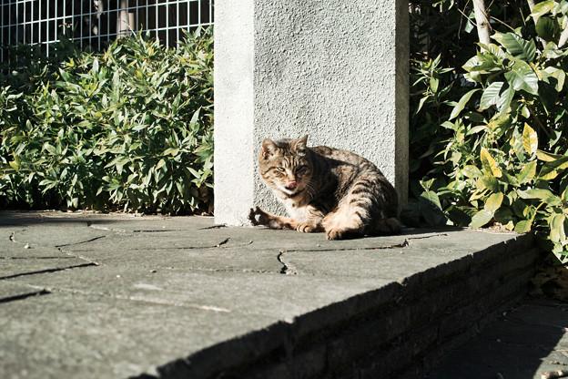 猫撮り散歩2361