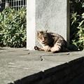 Photos: 猫撮り散歩2361