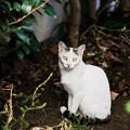 Photos: 猫撮り散歩2362