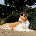 Photos: 猫撮り散歩2363