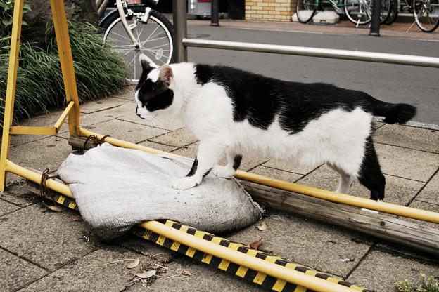 猫撮り散歩2364